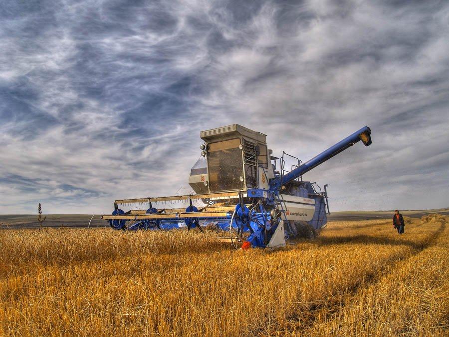 стоит уборка пшеницы комбайнами картинки уоттсу все приходится