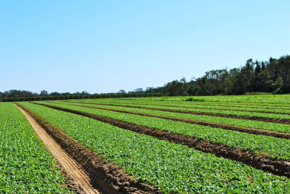 Органическое земледелие — вектор на экологию
