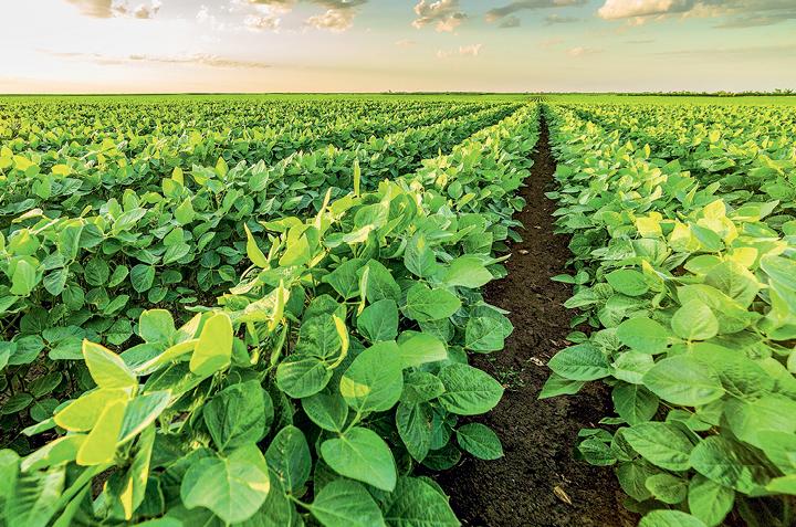 Урожайные приемы — совершенствование системы возделывания сои